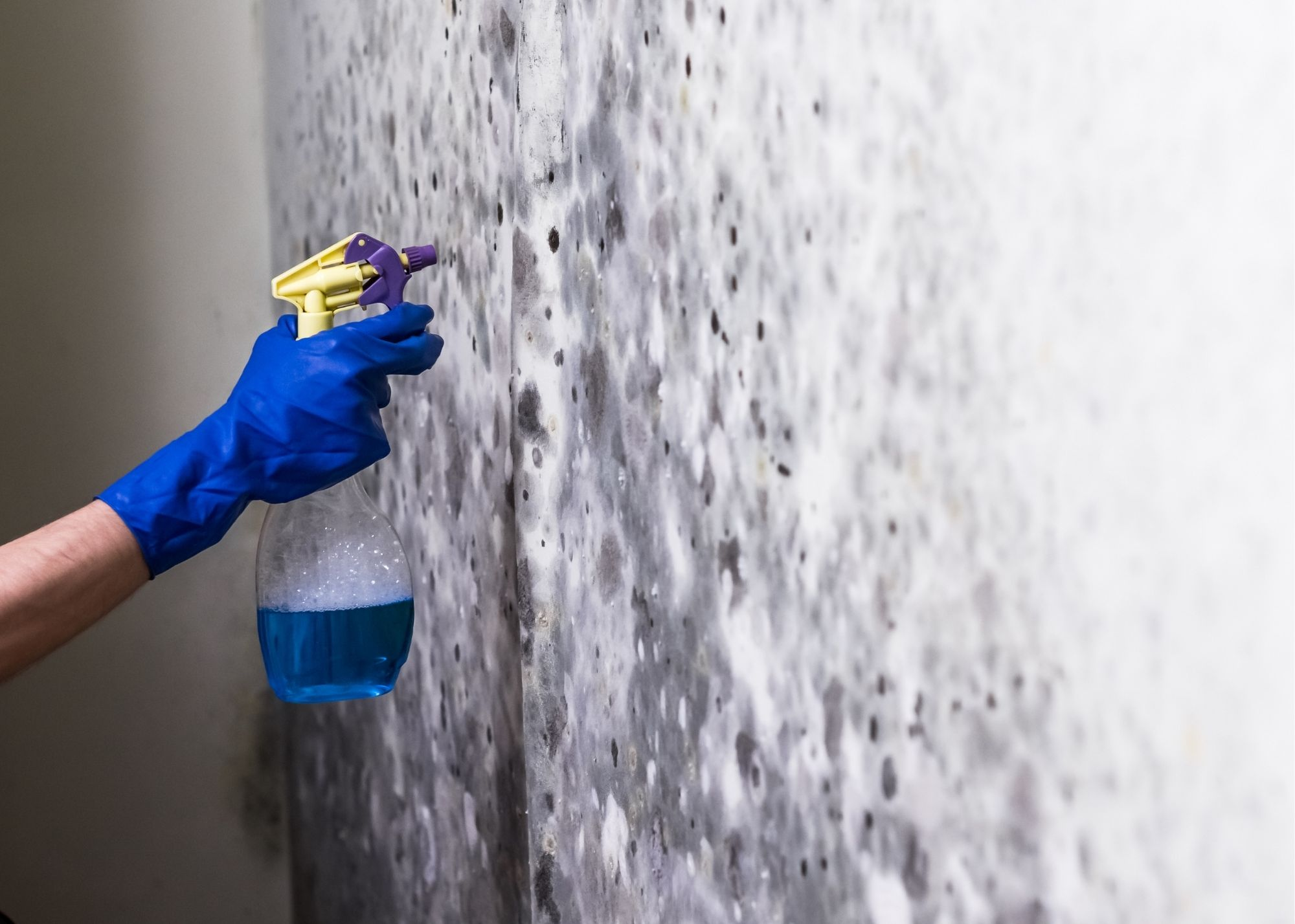 mold removal in Rochester NY