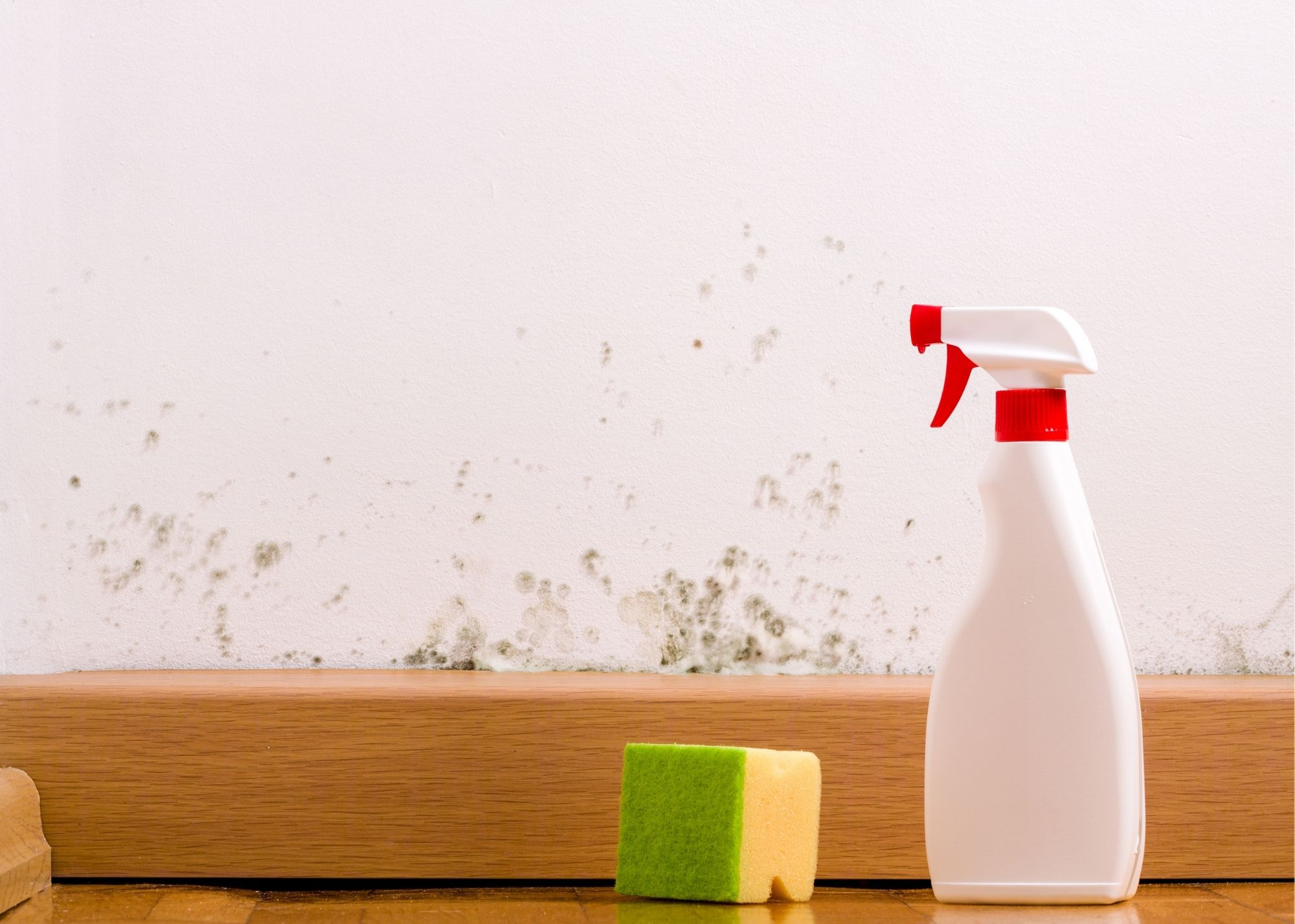 mold removal Rochester New York