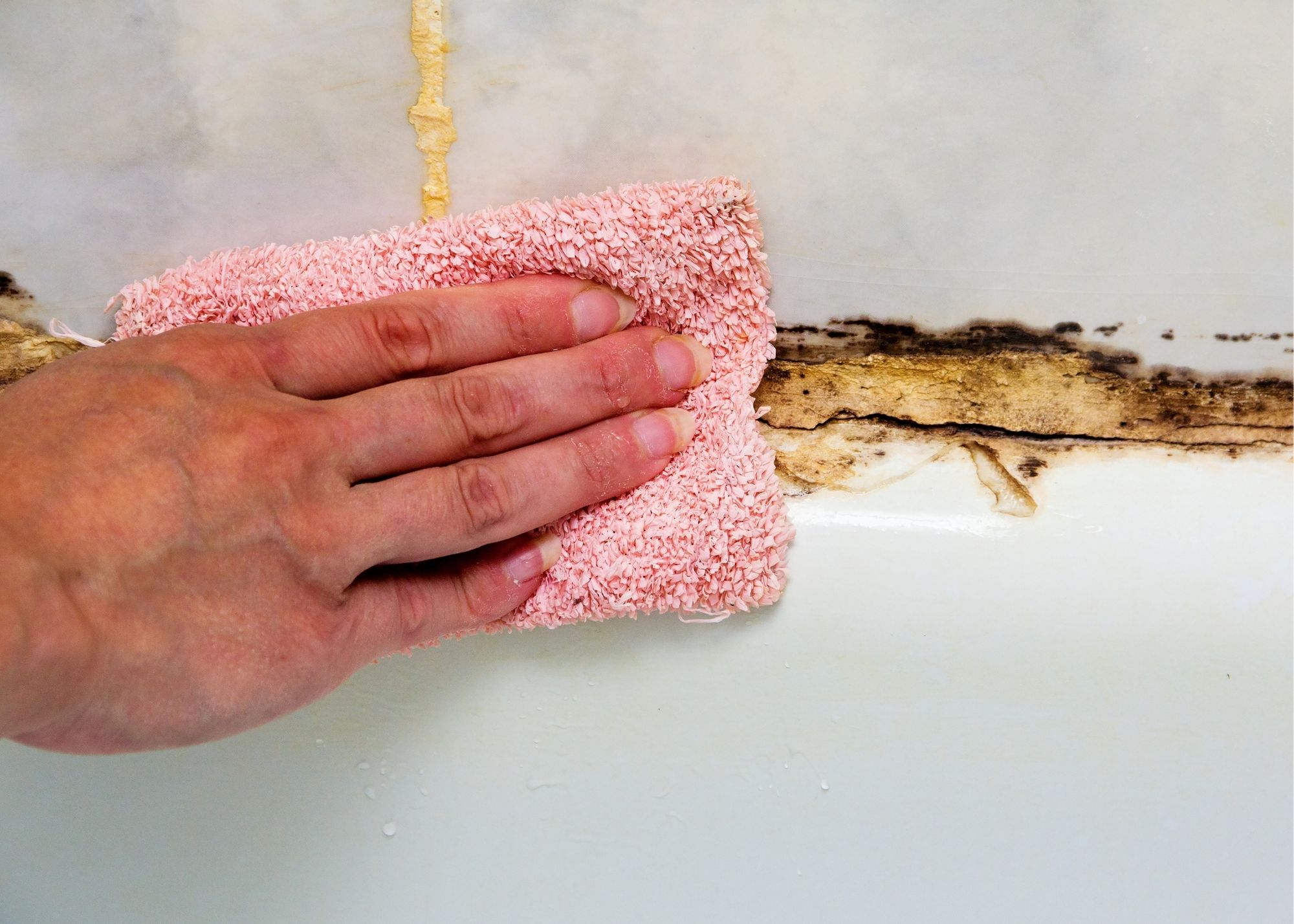 mold remediation Rochester