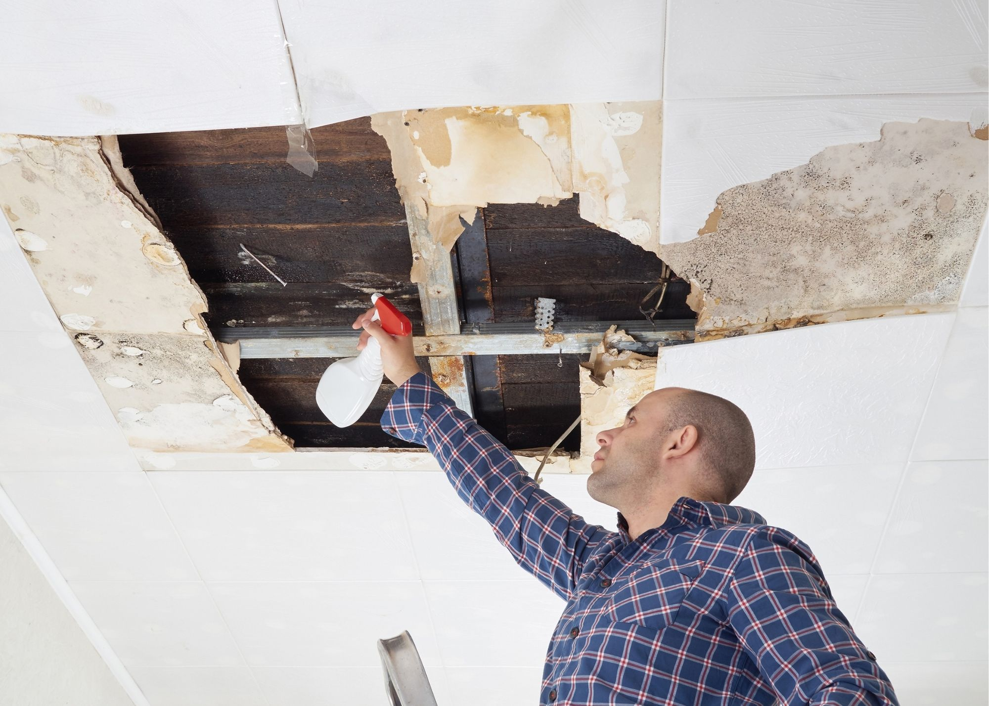 mold removal Rochester